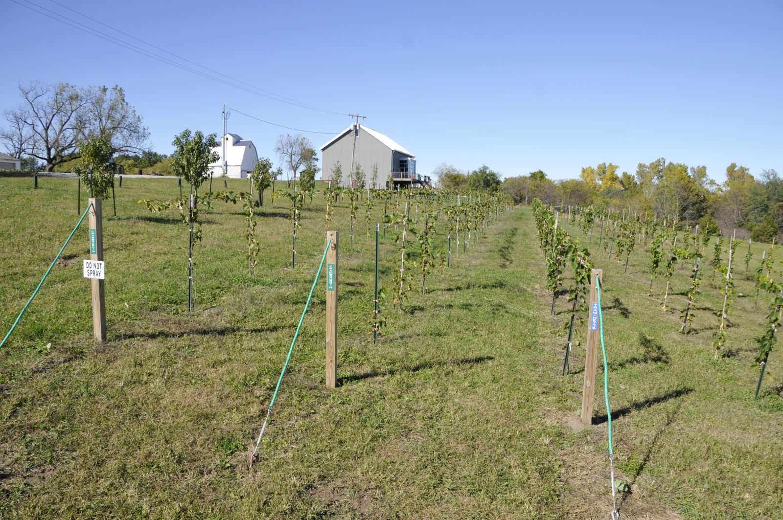 Vineyard, orchard, vegetable gardens