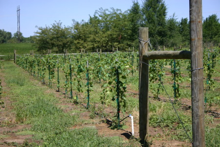 Highland Offering Grape Growing Workshops