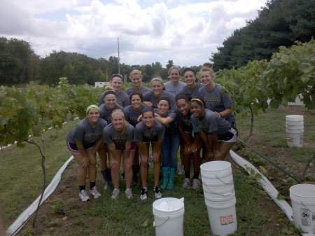 Scottie Volleyball Team Harvests Grapes
